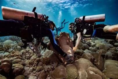 Les lésions des récifs à Curaçao sont gratuites