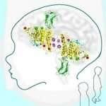 Observation en 3D de protéines neuronales incriminées dans l'autisme