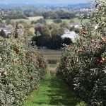 Feu et intoxication pour sauver nos pommes